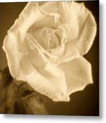 Sepia Rose With Rain Drops Metal Print by M K  Miller