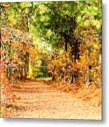Serene Path Metal Print