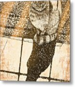 Shadow Cat Metal Print by Laura Brightwood