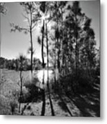 Shadowy Path Metal Print