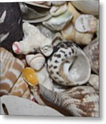 She Sells Seashells Metal Print