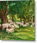 Sheep Pasture Ithaca New York Metal Print by Ethel Vrana