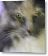 Shelby--dont Mess With Me Metal Print