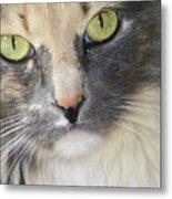 Shelby's Eyes 4 Metal Print