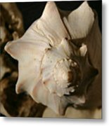 Shell And Driftwood Metal Print
