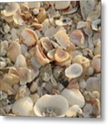 Shells On Beach Metal Print