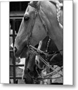 Show Horses Metal Print