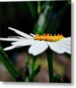 Side Of A Daisy Metal Print