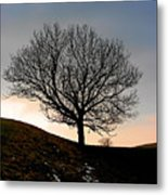 Silhouette Of A Tree On A Winter Day Metal Print