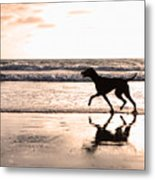 Silhouette Of Dog On Beach At Sunset Metal Print by Susan Schmitz