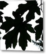 Silhouetted Maple Metal Print