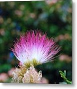 Silk Tree Flower Metal Print