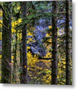 Silver Falls State Park Oregon 2 Metal Print