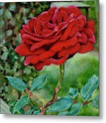 Simply A Rose Metal Print
