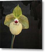 Single Orchid Metal Print