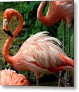 Sleeping Flamingo Metal Print