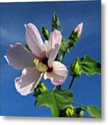 Sleepy Hibiscus Metal Print