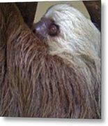 Sloth Metal Print
