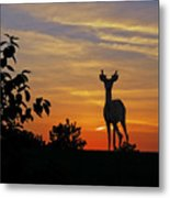 Small Buck Against Sunset Metal Print by Ron Kruger