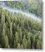 Smoke In Forest Metal Print