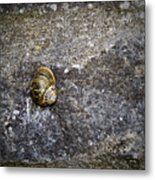 Snail At Ballybeg Priory County Cork Ireland Metal Print