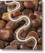 Snake Skeleton  Metal Print by Garry Gay