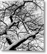 Snow And Trees 2 Metal Print