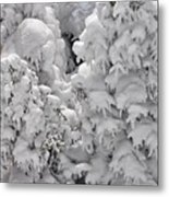 Snow Coat Metal Print