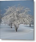Snow-covered Apple Tree Metal Print by Erica Carlson