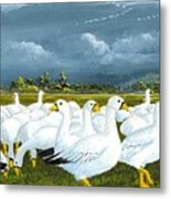 Snow Geese Gathering Metal Print
