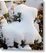 Snow Goat Metal Print