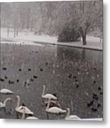 Snow Over Swan Lake Metal Print
