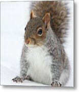 Snow Squirrel Metal Print