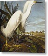 Snowy Heron Metal Print by John James Audubon