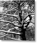 Snowy Limbs Metal Print