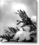 Snowy Pine Branch Metal Print