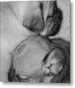 Snuggling Siblings Metal Print by Patricia M Shanahan