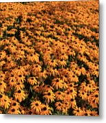 So Many Flowers To Pick From........ Metal Print