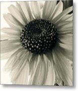 Soft White Light Metal Print by Trish Hale