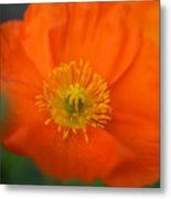 Softly Poppies Metal Print by Kathy Yates