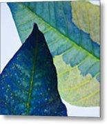Something Blue Metal Print by Bobby Villapando