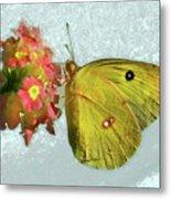 Southern Dogface Butterfly Feasting On December Lantanas Austin V2 Metal Print