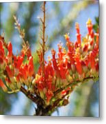 Southwest Ocotillo Bloom Metal Print