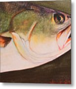 Speckled Trout Metal Print by Amanda Ladner