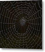 Spider Cobweb  Metal Print