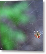 Spider In Web Metal Print
