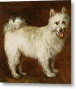 Spitz Dog Metal Print by Thomas Gainsborough