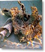 Sponge And Shell Metal Print