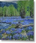 Spread Creek Lupine Metal Print