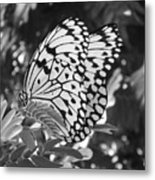 Spread You Wings And Fly Metal Print